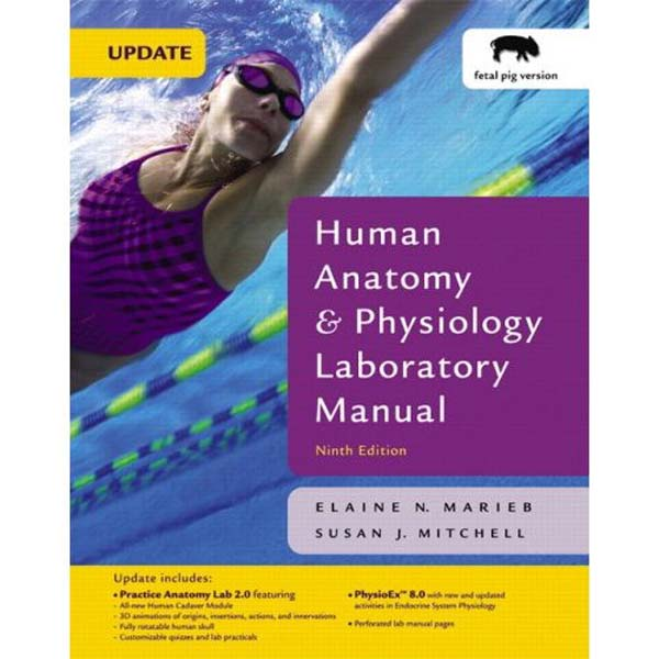human anatomy and physiology 10e marieb chapter36 Human anatomy & physiology / edition 10 in honor of her contributions, the university is now home to the elaine nicpon marieb college of health and human services.
